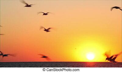 beau, 7, centaines, coucher soleil, fond, oiseaux