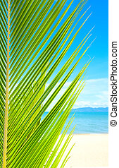 beau, arbre, exotique, sable, plage paume