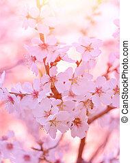 beau, arbre, fleurir