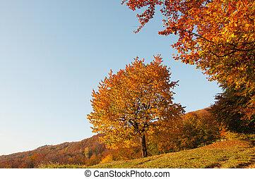 beau, arbre, jaune