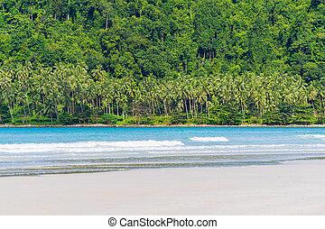 beau, arbre noix coco, exotique, paume, mer, plage