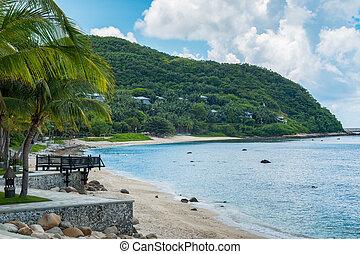 beau, arbre noix coco, exotique, plage paume
