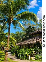 beau, arbre tropical, paume, maison, thaïlande