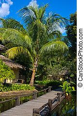 beau, arbre tropical, paume, thaïlande, plage