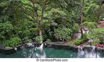 beau, arbres, exotique, arrière-plan vert, dehors, piscine, natation