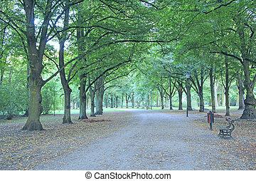 beau, arbres, vert, bancs, beaucoup, parc