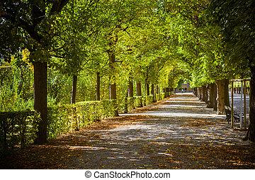 beau, automne, parc, ruelle