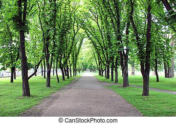 beau, beaucoup, parc, arbres verts
