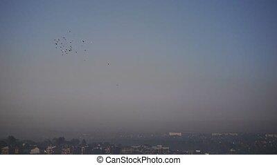beau, bleu, naturel, ceci, voler, ciel, magique, vidéo, coucher soleil, troupeau, oiseaux, (pigeons)