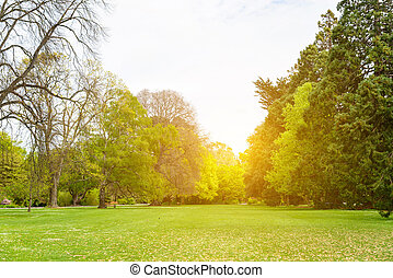 beau, bleu, plante, partiellement, parc, arbre, scène, nuageux, champ vert, herbe, public, ciel