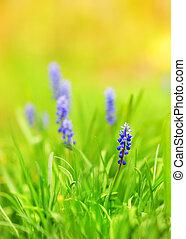beau, bleu, pré, (shallow, dof), fleurs