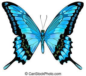 beau, bleu, vecteur, papillon, isolé