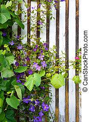 beau, brun, mur, maison, devant, fleurir, croissant, fleurs blanches