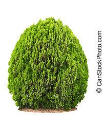 beau, buisson, vert