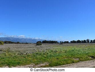 beau, californie, paysage, côtier, scénique, goleta