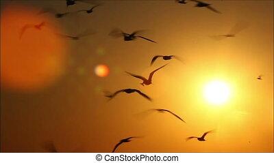 beau, centaines, coucher soleil, 4, fond, oiseaux