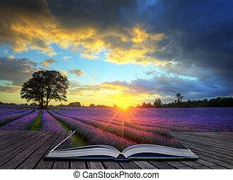 beau, concept, atmosphérique, mûre, vibrant, campagne, champs, image, ciel, lavande, créatif, abrutissant, coucher soleil, anglaise, nuages, sur, paysage