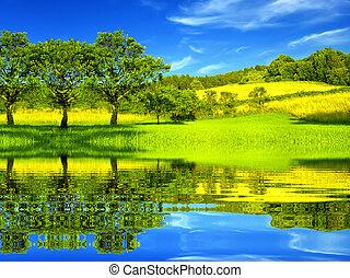 beau, environnement, vert