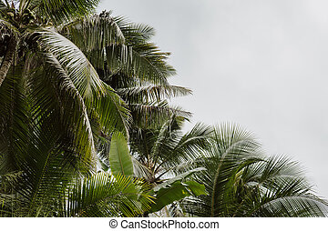 beau, exotique, noix coco, vendange, arbres, filtre, fond, paume