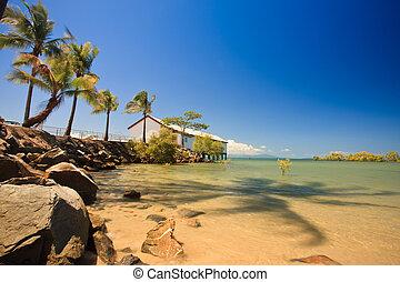 beau, exotique, palmiers, baie