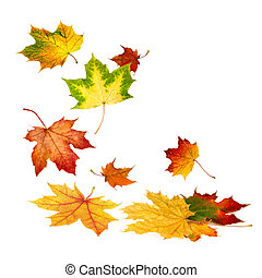 beau, feuilles automne, tomber