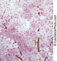beau, fleur, printemps, image, élevé, clair, clã©