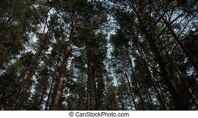 beau, forêt, arbres