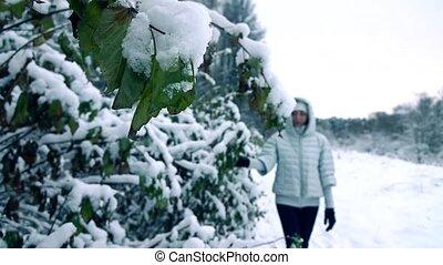 beau, forest., femme, fermé, neigeux, coup, jeune, neige, mouvement, couleurs, lent, branches, froid, secousse
