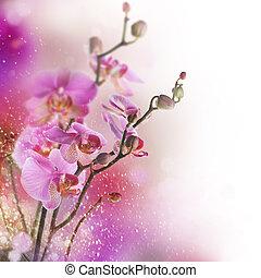 beau, frontière, orchidée