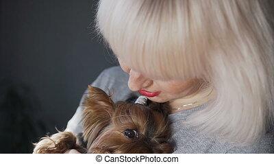 beau, gros plan, séance, chien, yorkshire, regarder, appareil-photo., mains, portrait, fille, peu, terrier