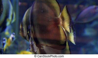 beau, image, coloré, reefs., corail, poissons tropicaux, sous-marin, récif, coraux