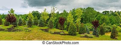 beau, lumière, parc, matin, champ, herbe verte, public