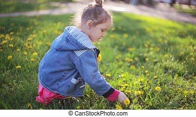 beau, mignon, peu, joli, bouquet, ensoleillé, day., flowers., pissenlits, choisir, confection, girl, dame, mieux