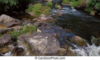 beau, montagne, rivière, 5, forêt