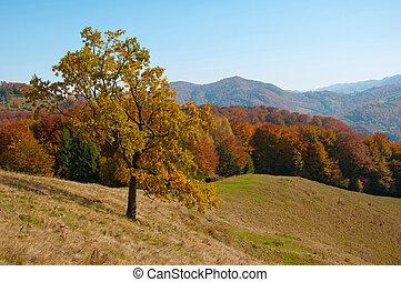 beau, montagnes, arbre, vert