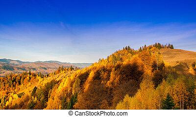 beau, montagnes, jaune, arbres