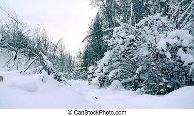 beau, mouvement, marche, femme, hiver, neigeux, coup, gris, jeune, veste, couleurs, lent, forêt, joli, froid