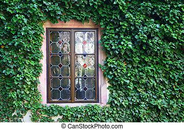beau, mur, fenêtre, envahi, vert, épais, lierre