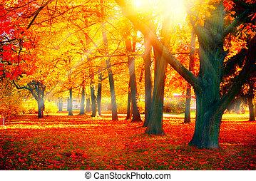 beau, nature, autumn., parc, automnal, scene., automne