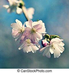 beau, nature, fleur, soleil, résumé, ensoleillé, scène, printemps, brouillé, day., flowers., arbre., fond, springtime.