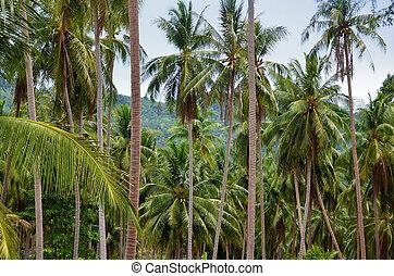 beau, noix coco, arbres, exotique, arrière-plan., paume