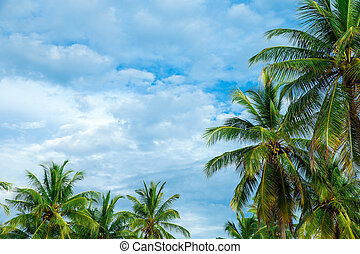 beau, noix coco, arbres, exotique, paume, fond