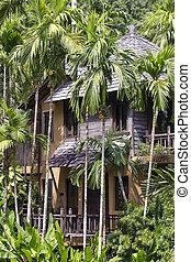 beau, noix coco, arbres verts, exotique, paume, maison, thaïlande