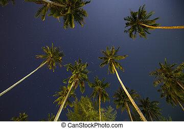beau, noix coco, ciel, arbres, exotique, étoiles, nuit paume, thaïlande