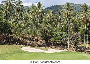 beau, noix coco, golf, ciel, arbre, cours, paume, vert, thaïlande, paysage