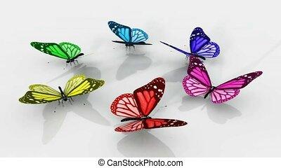 beau, papillons, coloré