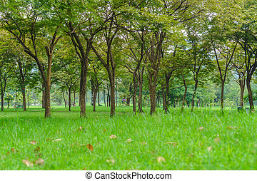 beau, parc vert, arbres