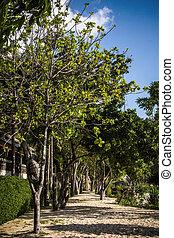 beau, parc ville, arbres, vert, sentier