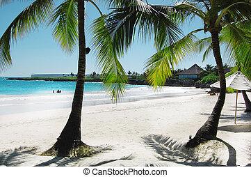 beau, plage tropicale