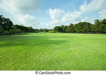 beau, plante, herbe, espace, lumière, polyvalent, parc, arbre, matin, champ, vert, perspective, frais, copie, public